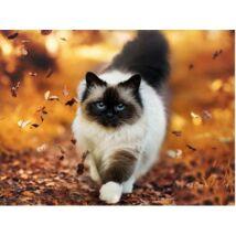 Gyémántkirakó készlet - Ragdoll cica (szögletes)