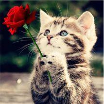 Gyémántkirakó készlet - Cica rózsával