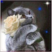 Gyémántkirakó készlet - Szürke cica rózsával