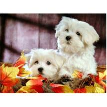 Gyémántkirakó készlet - Két fehér kutyus
