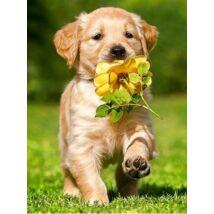 Gyémántkirakó készlet - Kölyökkutya virággal a szájában
