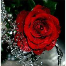 Gyémántkirakó készlet - Piros rózsa cseppekkel FLUO