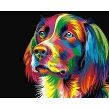 Számfestő - Színes kutya