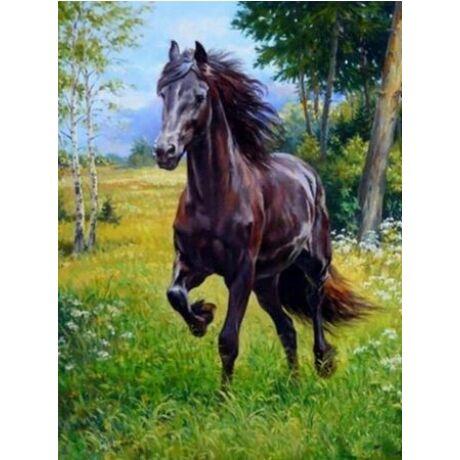 Számfestő - Futó ló