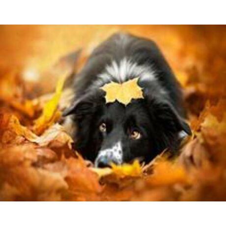 Számfestő - Kutya a levelek közt